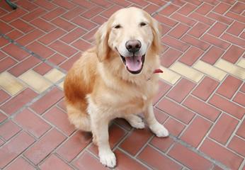 【写真】セラピー犬として院内で大活躍